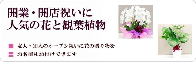 開業・開店祝いに人気の花と観葉植物